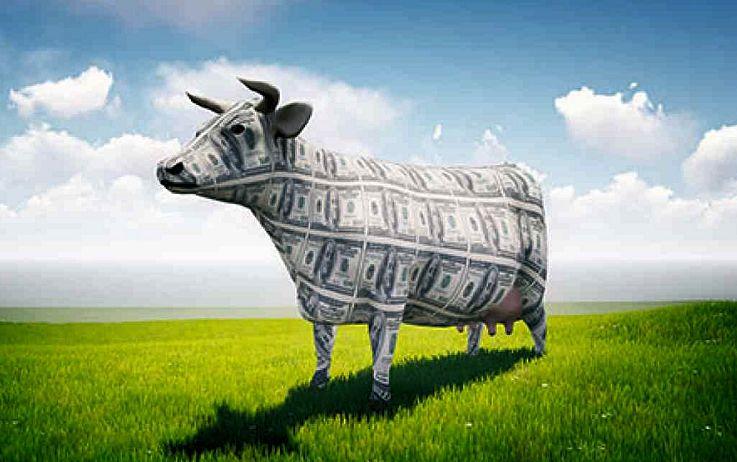 Scandali finanziari nell'Italia da mungere