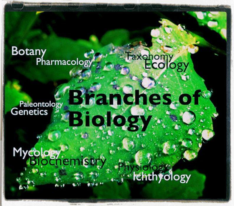 Scienza, umanità e biologia