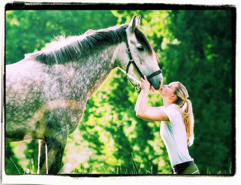 Cavalli famosi aforismi celebri