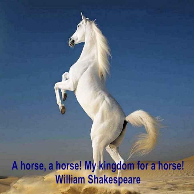 Cavalli famosi e una cavalla golosa