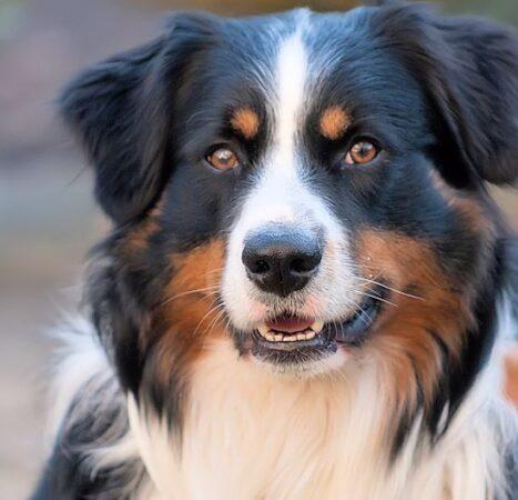 Aforismi sui cani