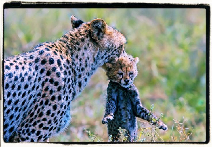 Animali e sentimento d'amore